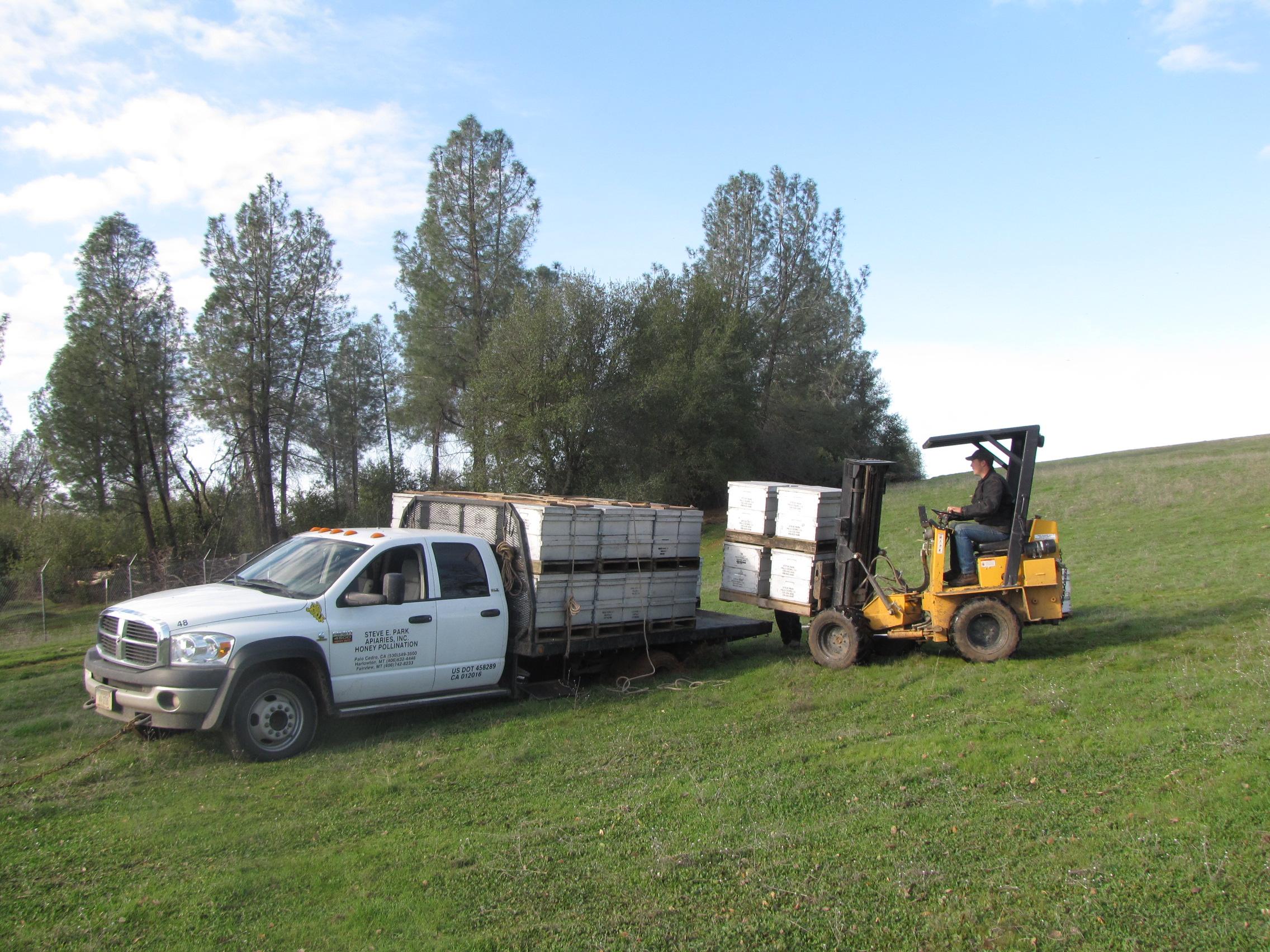 Steve Park Glacier County Honey Co