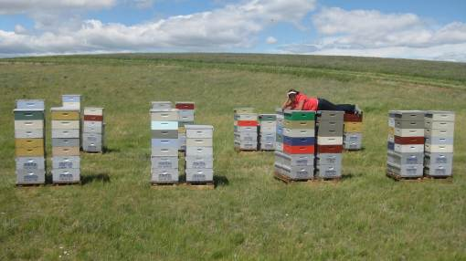 Sometimes To Replace Dead Hives With And Build Up The Strength Of Existing Among Other Reasons A Commercial Beekeeper Purchasing